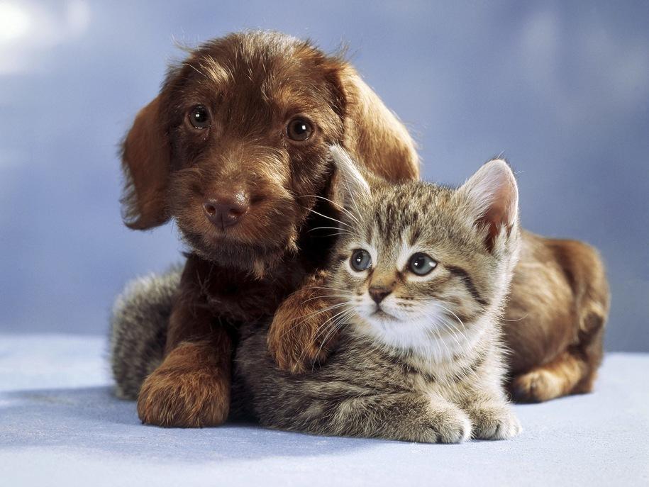 Fundacja Armia Przyjaciół dla zwierząt